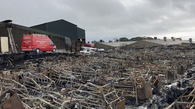 Suspected Electrical Fault: Farmer Devastated After 2000 Pigs Die in Fire